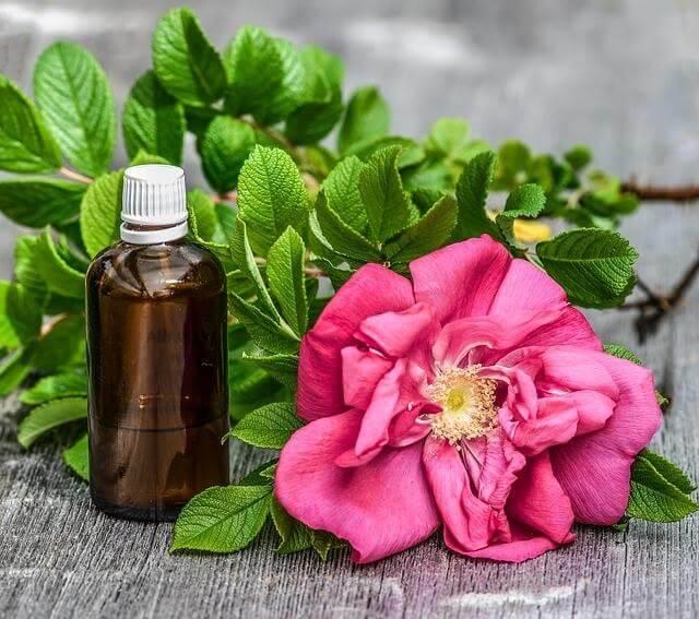鼠尾草精油是什么_不同品种的作用和副作用