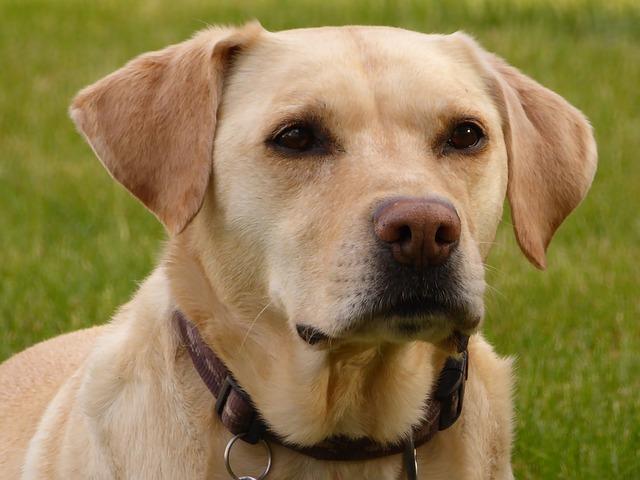 精油对猫和狗非常有害,根据你使用的精油种类,精油会严重影响猫和狗的肝脏