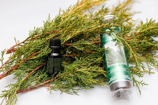 松树精油是什么?有什么好处和用途?