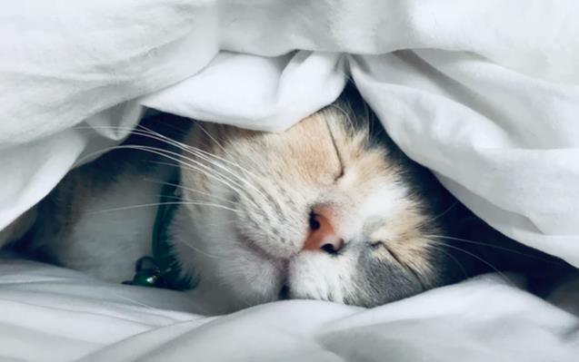 睡眠可改善皮肤(如何通过睡眠让皮肤更好)
