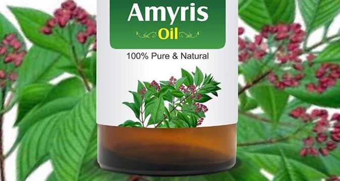 阿米香树精油是什么_功效与作用_副作用