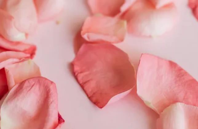 玫瑰精油,玫瑰花瓣